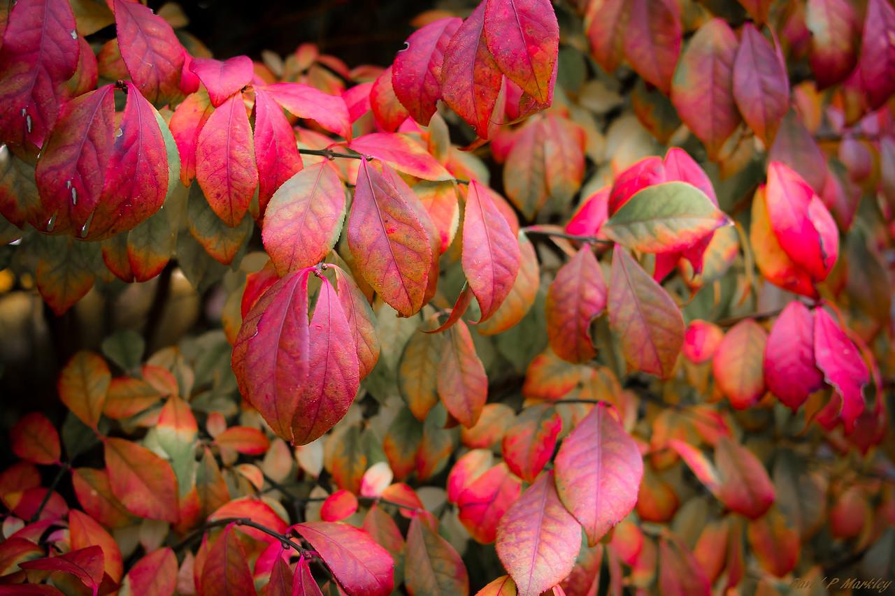 Fall Saturation