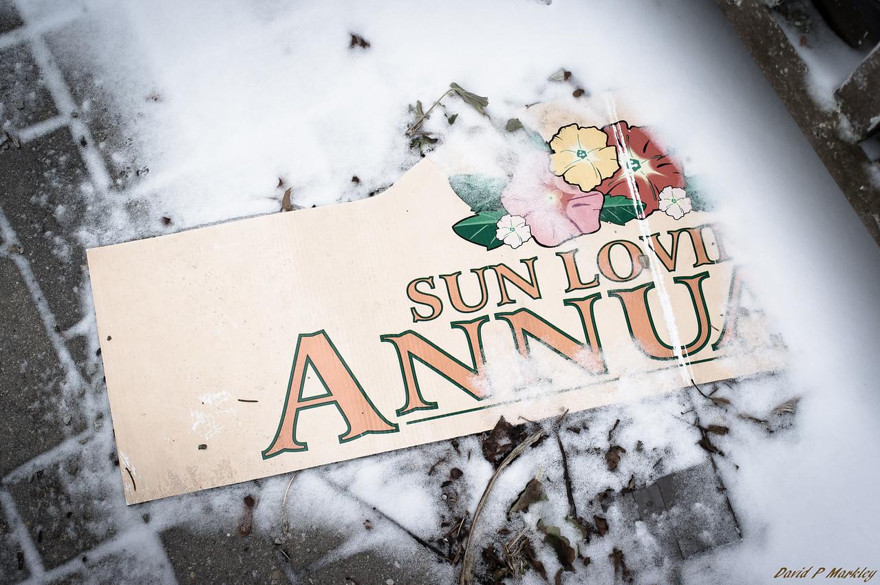 Sun Loving Annuals