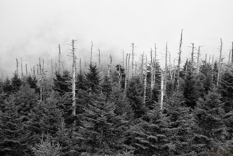 Tree Points
