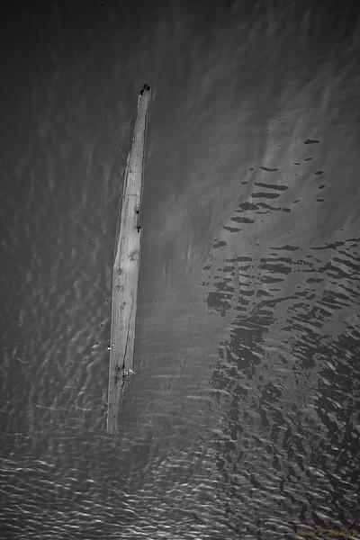 Wood Adrift
