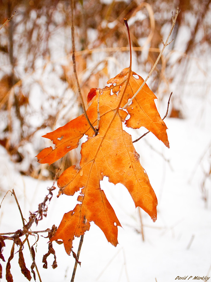 Tangled Leaf