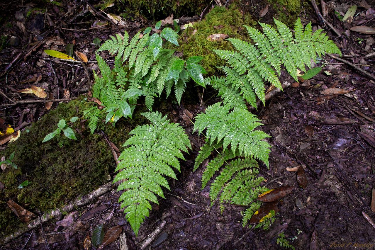 Trail Greens