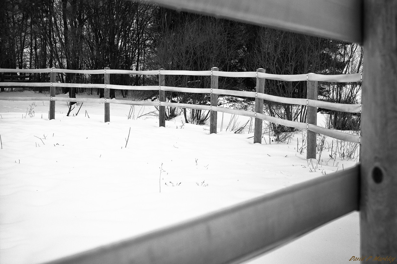 Fence Peek