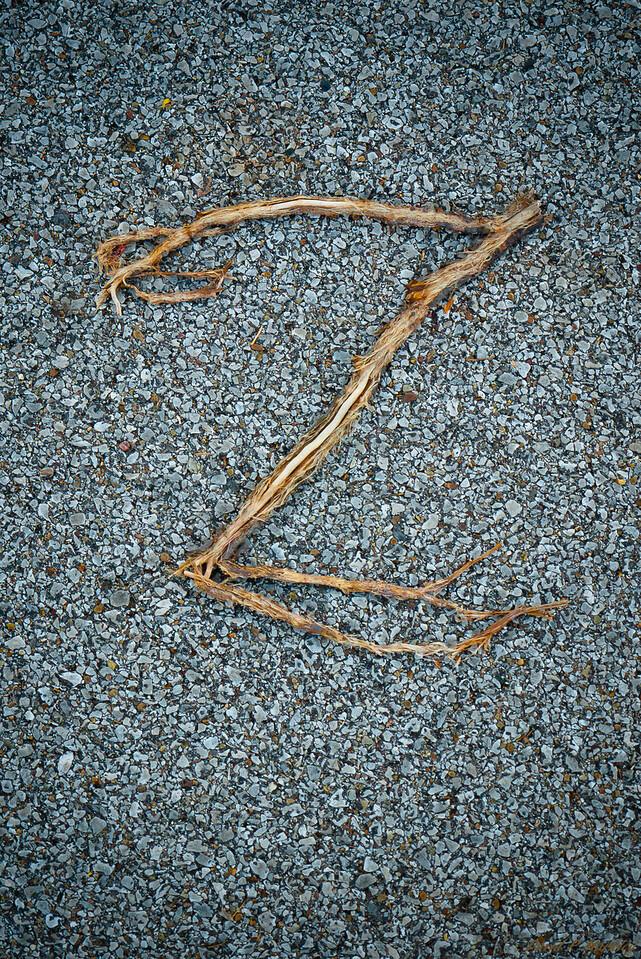 Z Branch