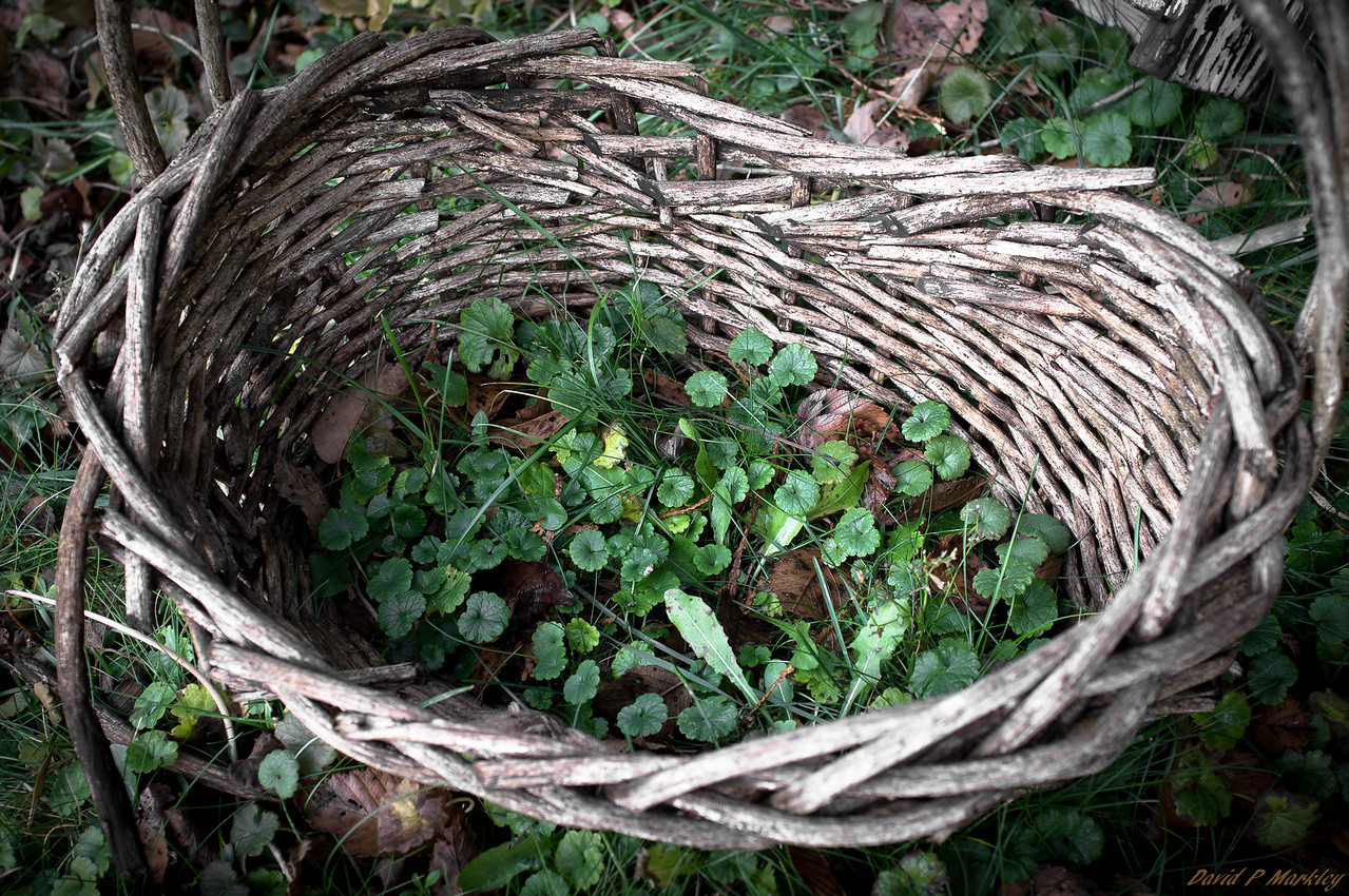Basket of Green