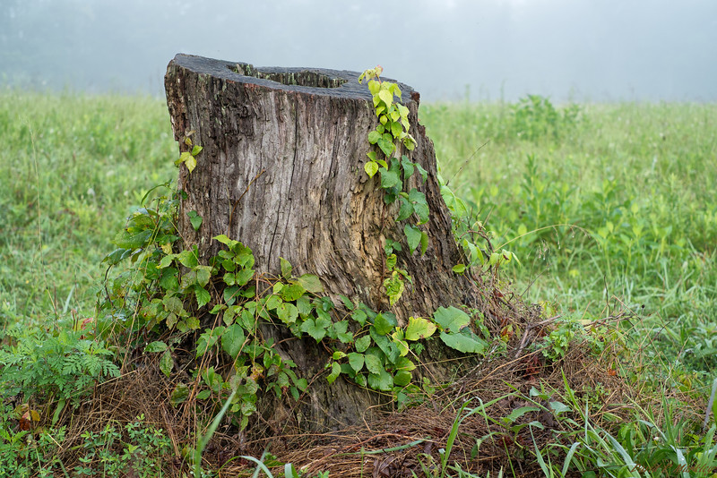 Colorful Stump