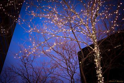 Branch Lighting