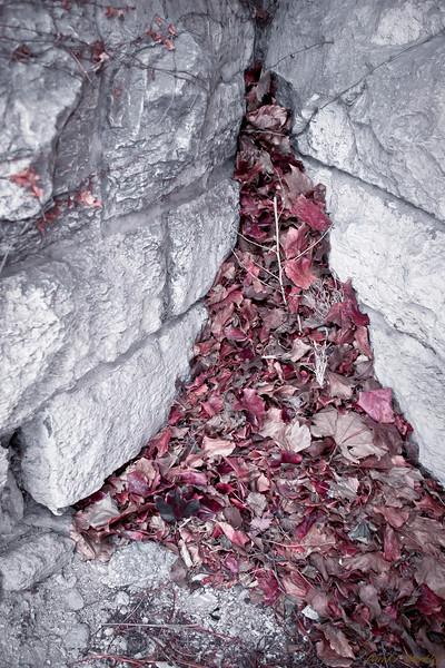 Cornered Autumn