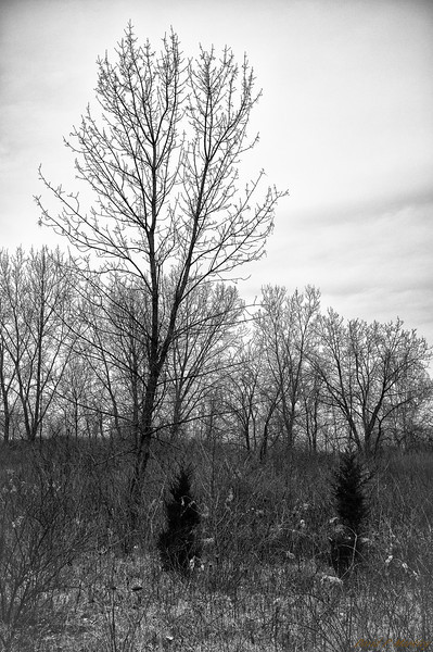 Barren Brush