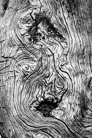 Tree Terrain