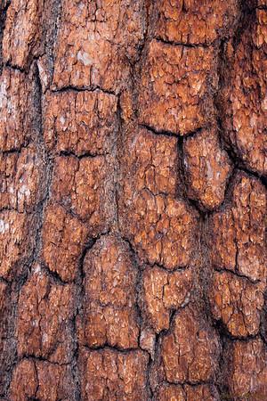 Tree Scales