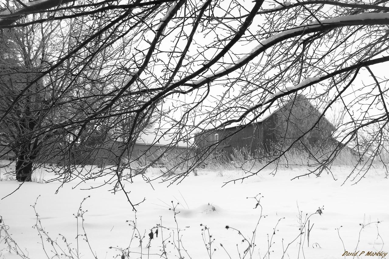 Beneath Tree