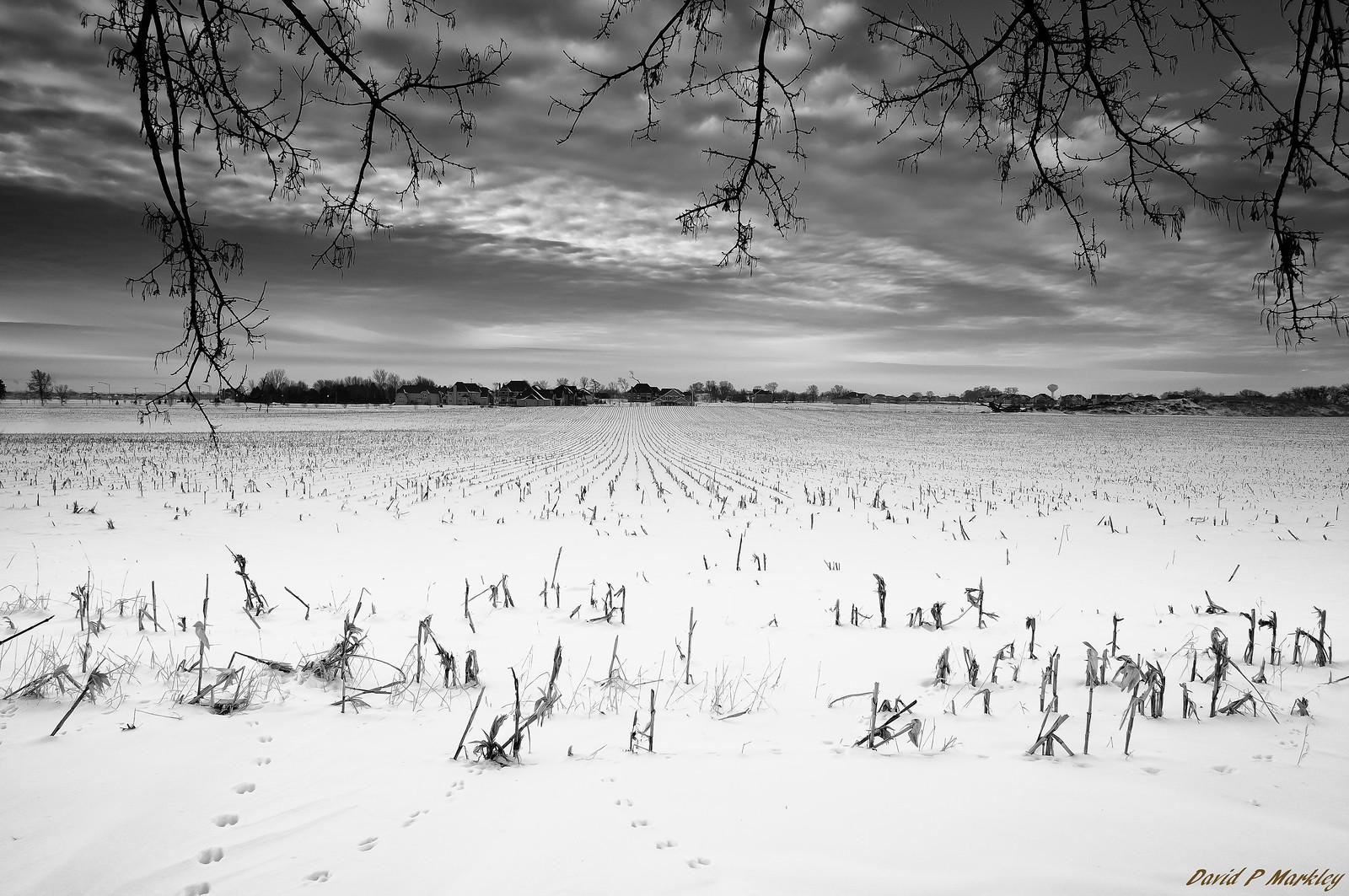 White Field