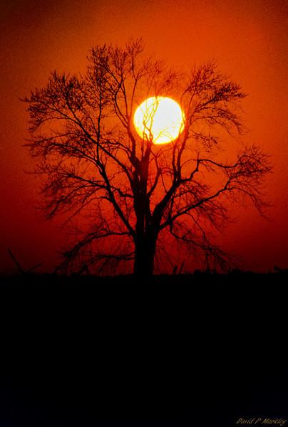Nestled Sun