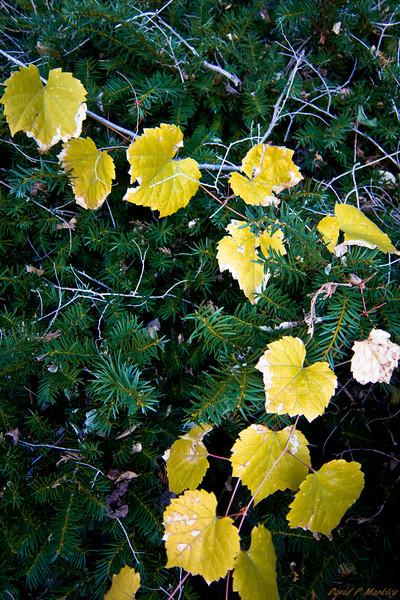 Leaf String