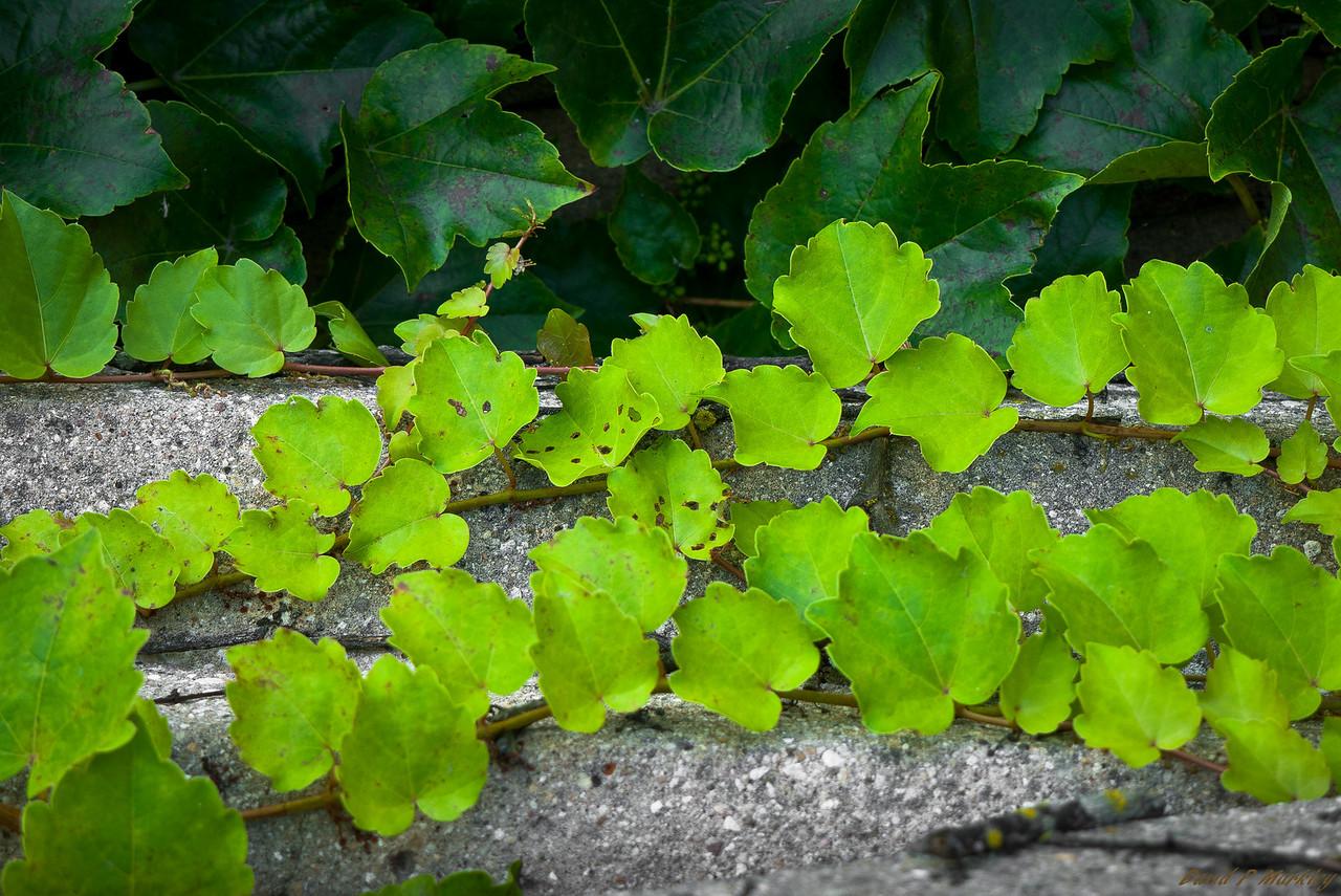 Ivy Reach