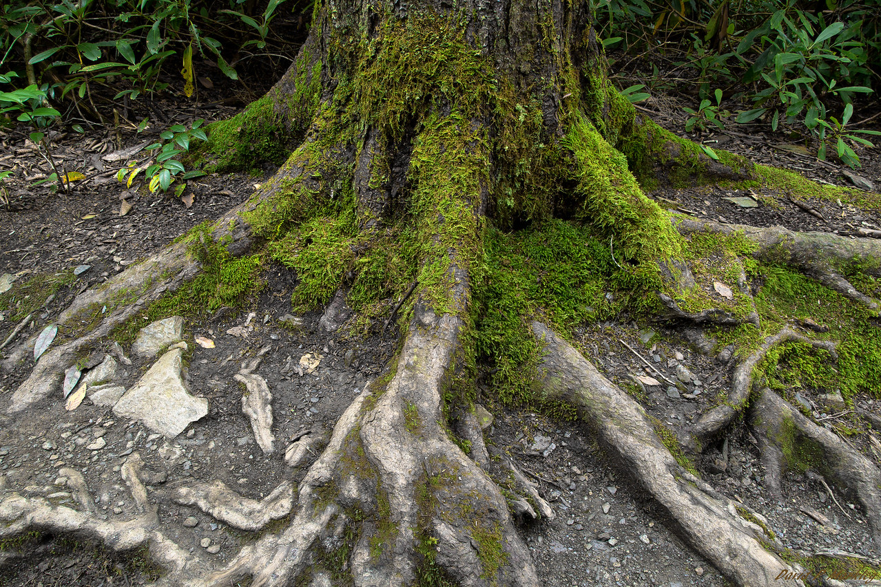 Above Roots