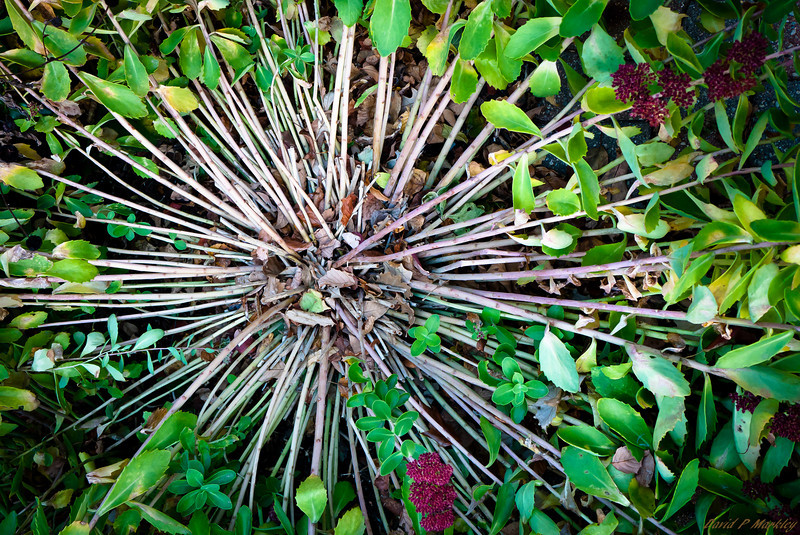 Plant Outreach