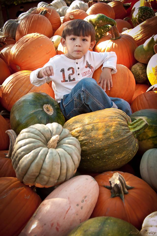 Pumpkin Climb