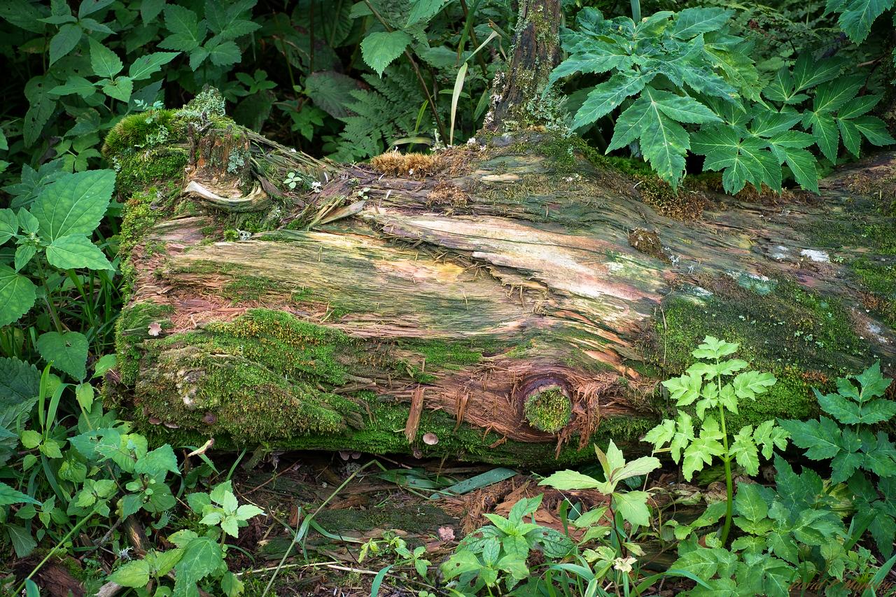 Surrounded Log