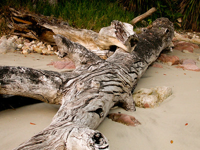 Beach wood - Coromandel, New Zealand