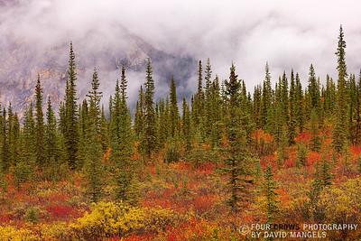 """""""Arctic Autumn"""""""