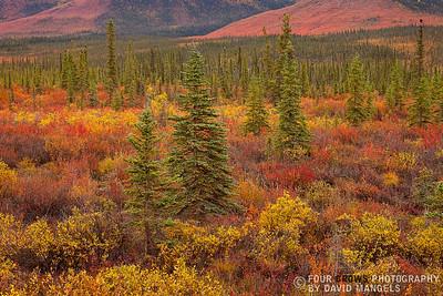 """""""Black Spruce Wilderness"""""""