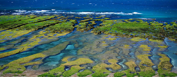 Tide pools, Valdes Peninsula, Patagonia, Argentina.