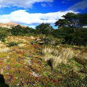 In Los Glaciares National Park, Patagonia, Argentina