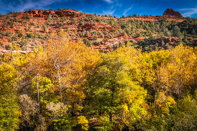 Fall Foliage in Oak Creek Canyon