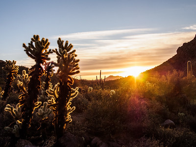 Sunburst and Chollas