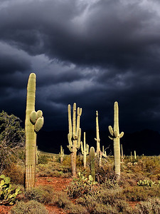 Saguaro Storm Superstition Mountains
