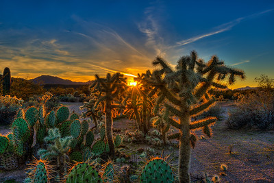 Backlit Cacti Along Bush Highway, Arizona