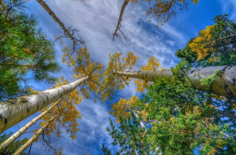 Lockett Meadow Fall Colors, Arizona