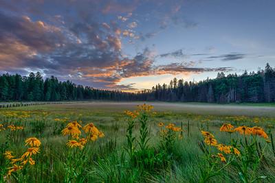 Hannagan Meadow, Arizona