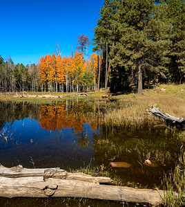 Fall Colors on the Mogollon Rim, Arizona