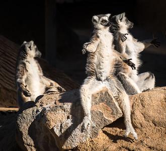 Sun Worshipers, At Wildlife World Zoo and Aquarium, Litchfiled Park, Arizona