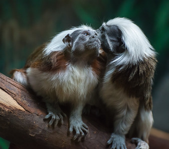 Whispering Sweet Nothings, At Wildlife World Zoo and Aquarium, Litchfiled Park, Arizona