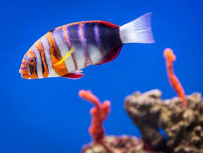 Nemo, At Wildlife World Zoo and Aquarium, Litchfiled Park, Arizona