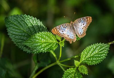 Butterfly Wonderland, Scottsdale Arizona