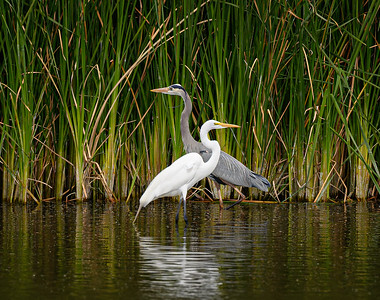 2416 Egret and Heron