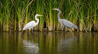 2415 Egret and Heron