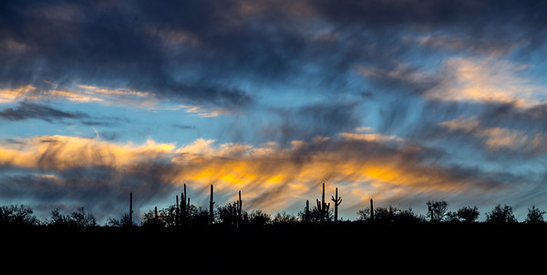 Silhouetted Saguaros and Virga, Saguaro Lake, Arizona