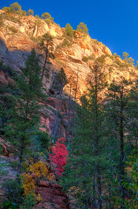 West Fork Canyon Fall Colors, Arizona