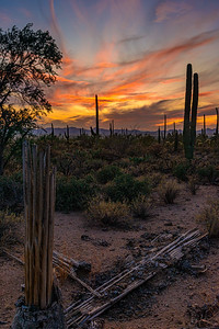 5775 Saguaro National Park West