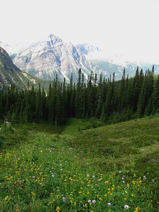 Cavell - Meadow Trail