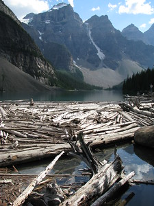 Moraine Lake Timber