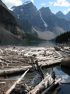 Moraine Lake Timber