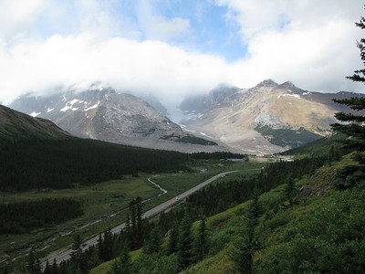 Icefields from Wilcox Pass