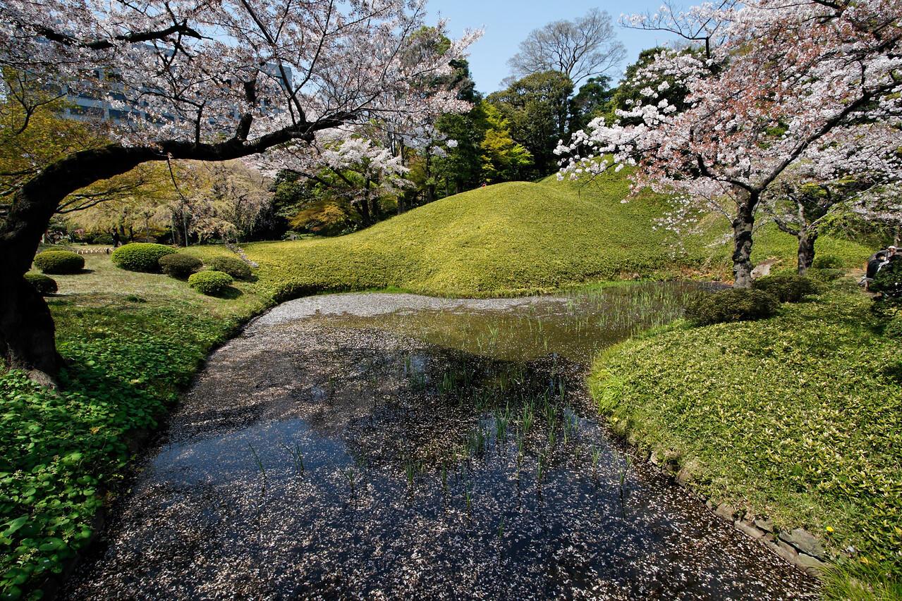 Cherry blossoms - Koishikawa Korakuen, the oldest garden in Tokyo. Japan  2008